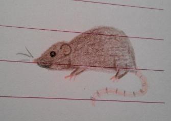 October 1997 - Rat